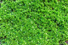 MOSS - Closed up/macro shot of mossy of the tropical kind. Stock Photo