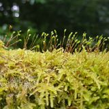 Moss closeup Stock Photo