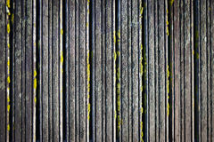 Of moss colored wooden boards as a background Stock Image
