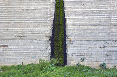 Moss on concrete Stock Photo