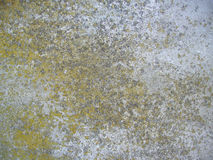 Moss concrete background Royalty Free Stock Images