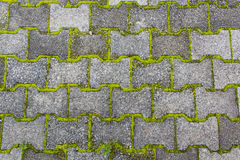 Moss on the concrete block Royalty Free Stock Photo