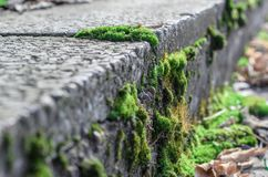 Moss on concrete. Royalty Free Stock Images