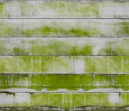 Moss on concrete wall Stock Image