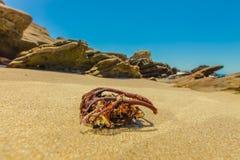 Moss Cove Laguna Beach Fotografering för Bildbyråer