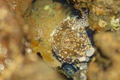 Moss Cove, Laguna Beachzeeëgel Stock Foto's