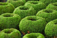 Moss cover on clay pot for decoration Stock Photography