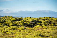 Moss cover on volcanic landscape of Iceland. Eldhraun lava field (moss cover on lava rock) glacier and mountain in Vatnajokull National Park, beautiful volcanic Stock Photo