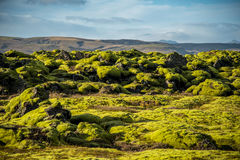 Moss cover on volcanic landscape of Iceland. Eldhraun lava field (moss cover on lava rock) glacier and mountain in Vatnajokull National Park, beautiful volcanic Stock Photos
