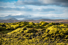 Moss cover on volcanic landscape of Iceland. Eldhraun lava field (moss cover on lava rock) glacier and mountain in Vatnajokull National Park, beautiful volcanic Stock Images