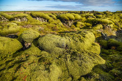 Moss cover on volcanic landscape of Iceland. Eldhraun lava field (moss cover on lava rock) in Vatnajokull National Park, beautiful volcanic landscape of Iceland Stock Photography