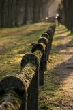 Moss coverd fence Nature Park Green Closs-Up royalty free stock image