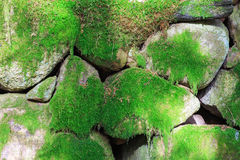Moss coverd old stone wall. Old stone wall cover with green moss royalty free stock image