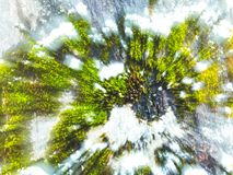 Moss coverd by snow on the surface of the tree. Moss growing on a tree. Close-up.  royalty free stock image