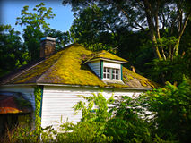 Moss covered abandoned house. An abandoned farmhouse with a moss covered roof in the woods Stock Photos
