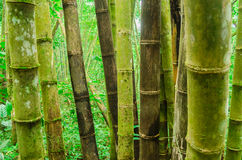Moss covered bamboo Stock Image