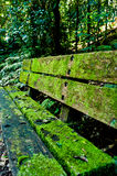 Moss covered bench. A moss covered bench in a subtropical forest royalty free stock image