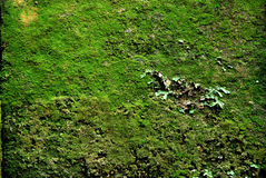 Moss Covered Block Stock Photo