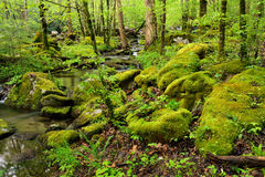 Moss covered boulders deep in the forest. Royalty Free Stock Photos