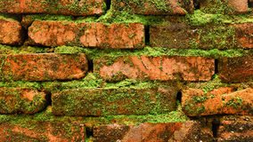 Moss Covered Brick Wall Royalty Free Stock Photography