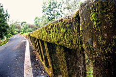 Moss covered bridge Royalty Free Stock Photo