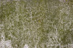 Moss Covered Concrete Wall Arkivbilder
