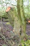 Moss Covered Cut Tree Lizenzfreie Stockfotos