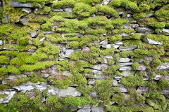 Moss covered Dry Stone wall in the Lake District. Dry stone wall covered in moss acting as a field divider in Lake District farmland Stock Photography