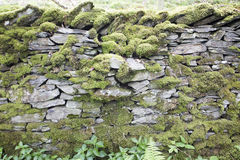 Moss covered Dry Stone wall in the Lake District. Dry stone wall covered in moss acting as a field divider in Lake District farmland Royalty Free Stock Photo