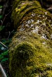 Moss-covered fallen tree. Close-up view royalty free stock images