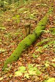 Moss covered fallen tree trunk Royalty Free Stock Images