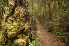 Moss covered forest Stock Photos