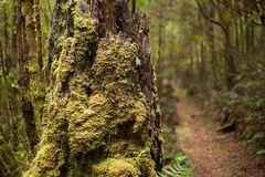 Moss covered forest Stock Photography