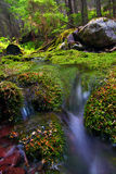 Moss Covered Forest and Stream Stock Photo