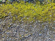 Moss Covered Gravel Ground Texture Stock Foto's
