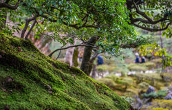 Moss Covered Ground Fotografia Stock Libera da Diritti