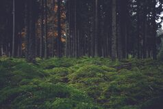 Moss-Covered Ground in a Forest Stock Image
