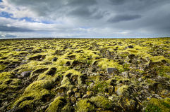 Moss covered landscape with far view to horizon and clouds. Stock Photos