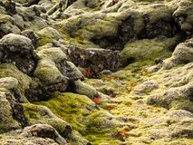 Moss-Covered Lava Bed Royalty Free Stock Images