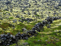Moss covered lava field. Volcanic lava covered by moss and lichen in Iceland Royalty Free Stock Photo