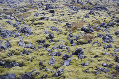 Moss covered lava fields, Iceland Stock Images