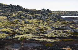 Moss Covered Lava Fields in Islanda Fotografie Stock