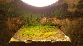 Moss Covered Limestone Stock Foto