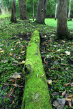 Moss Covered Log in Forest Stock Photo