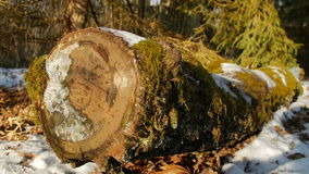 Moss covered log in the forest. Moss covered oak log in the forest, winter, slow motion stock footage
