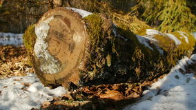 Moss covered log in the forest. Winter, slow motion stock footage