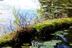 Moss Covered Log with Grass in Pond Royalty Free Stock Photo