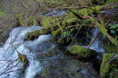 Moss covered logs and branches overhang the top of a waterfall Stock Photo