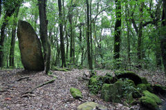 Moss covered megaliths in forest Stock Image