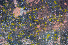 Moss-Covered Old Concrete Wall Stock Photo